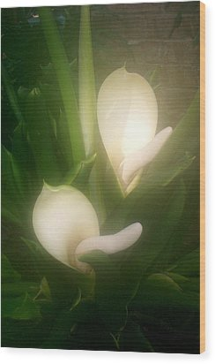 Mystery Bulb Blooming Wood Print