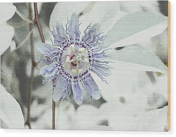 Passion Flower On White Wood Print by Tom Wurl