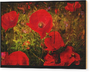 Wood Print featuring the photograph  Poppies by Beverly Cash
