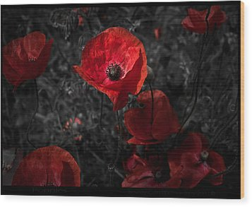 Wood Print featuring the photograph  Poppy Red by Beverly Cash