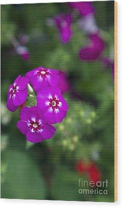 Pretty Flower Wood Print by Patty Malajak