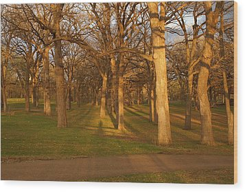 Shadows In The Park Wood Print