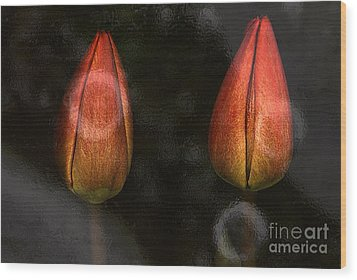 Tulips Wood Print by Odon Czintos