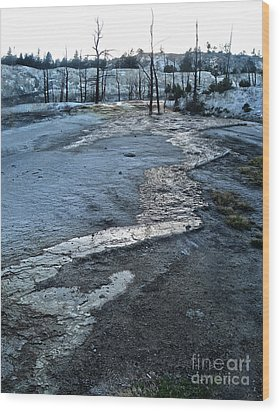 Yellowstone National Park - Minerva Terrace - Desolation Wood Print by Gregory Dyer