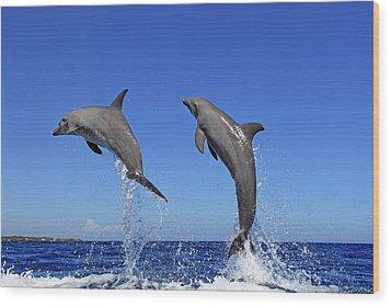 Delfin (grosser Tuemmler) Wood Print by Tier Und Naturfotografie J und C Sohns