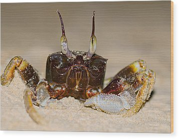 A Crab On The Shore  Wood Print by Ulrich Schade