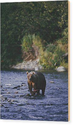A Kodiak Brown Bear Ursus Middendorfii Wood Print by George F. Mobley