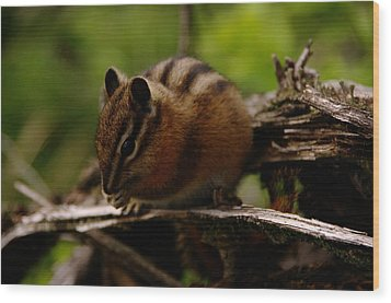 A Little Chipmunk Wood Print by Jeff Swan