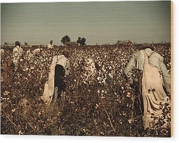 African American Day Laborers Picking Wood Print by Everett
