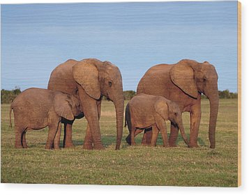 African Elephants Wood Print by Peter Chadwick
