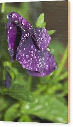 After Rain Wood Print by Svetlana Sewell
