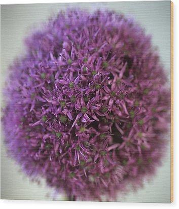 Allium Flower (allium Sp.) Wood Print by Cristina Pedrazzini