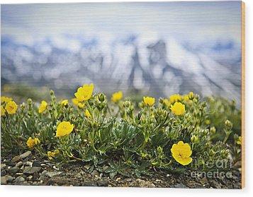 Alpine Meadow In Jasper National Park Wood Print by Elena Elisseeva