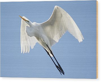 Angel Wings Wood Print by Paulette Thomas