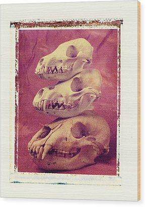 Animal Skulls Wood Print by Garry Gay