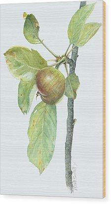 Apple Branch Wood Print by Scott Bennett