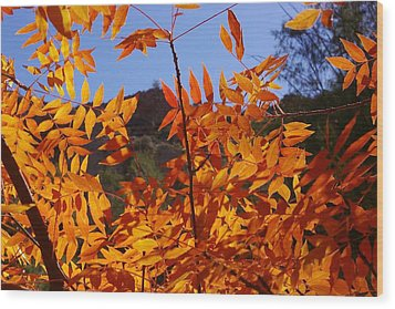 Arizona Fall Wood Print by David Rizzo