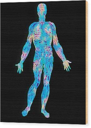 Artwork Of The Human Venous System (from Vesalius) Wood Print by Mehau Kulyk