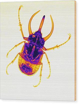 Atlas Beetle X-ray Wood Print by Ted Kinsman