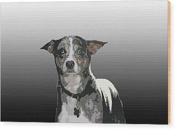 Australian Cattle Dog Sheltie Mix Wood Print by One Rude Dawg Orcutt