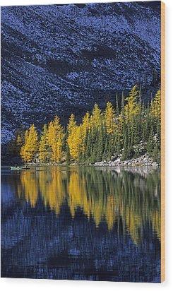 Autumn, Alpine Larch Trees, Lake Agnes Wood Print by John Sylvester