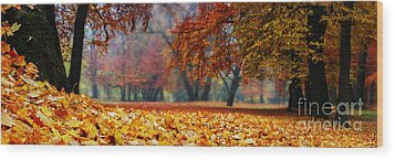 Autumn In The Woodland Wood Print by Hannes Cmarits