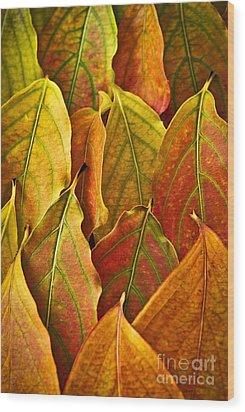 Autumn Leaves Arrangement Wood Print by Elena Elisseeva
