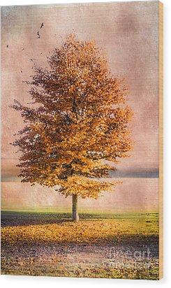 Autumn Light Wood Print by Hannes Cmarits