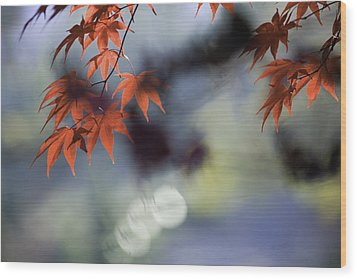 Autumn Red  Wood Print by Rob Travis