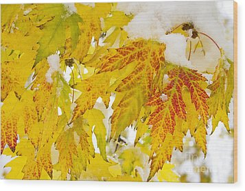 Autumn Snow  Wood Print by James BO  Insogna