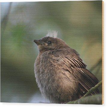 Baby Bird Wood Print by Cathie Douglas