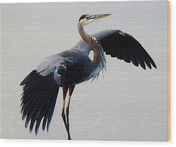 Beautiful Blue Heron Wood Print by Paulette Thomas