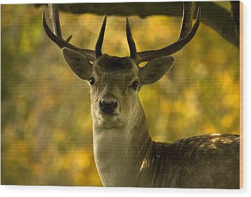 Wood Print featuring the photograph Beautiful My Deer by John Chivers