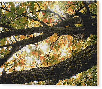 Beneath The Autumn Wolf River Apple Tree Wood Print