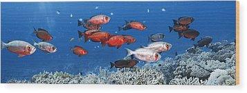 Bigeye Fish Wood Print by Alexander Semenov