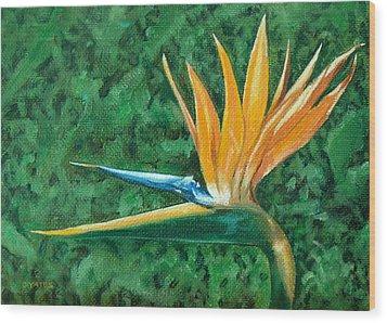 Bird Of Paradise Wood Print by Charles Yates