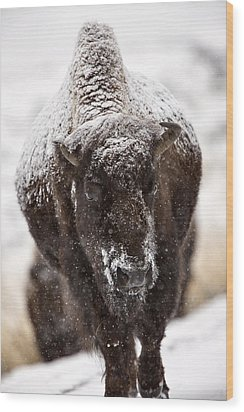 Bison Buffalo Wyoming Yellowstone Wood Print by Mark Duffy