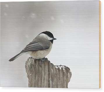 Wood Print featuring the photograph Black-capped Chickadee by Jack R Brock