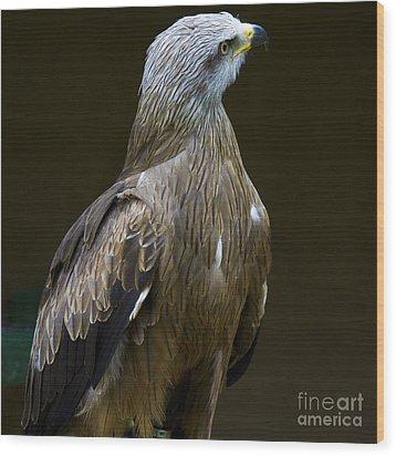 Black Kite 1 Wood Print by Heiko Koehrer-Wagner