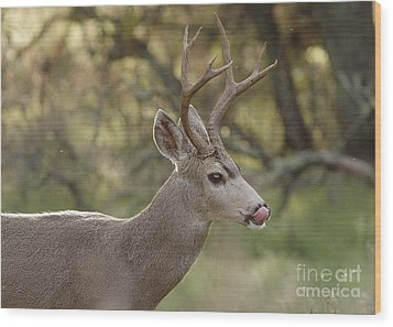 Wood Print featuring the photograph Black-tailed Deer by Doug Herr