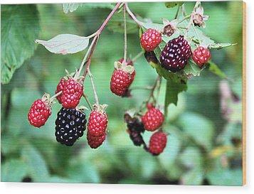 Blackberries Wood Print by Kristin Elmquist