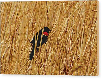 Blackbird In The Reeds Wood Print