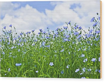 Blooming Flax Field Wood Print by Elena Elisseeva