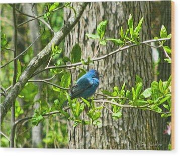 Blue Bird Of Happiness  Wood Print by Debra     Vatalaro