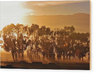 Wood Print featuring the photograph Blue Gum Trees by Werner Lehmann