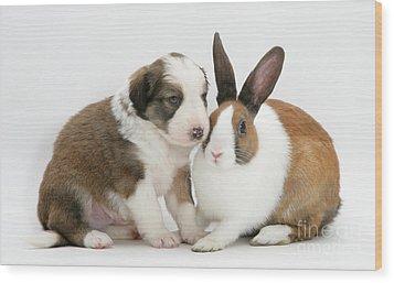 Border Collie Pup With Dutch Rabbit Wood Print by Jane Burton