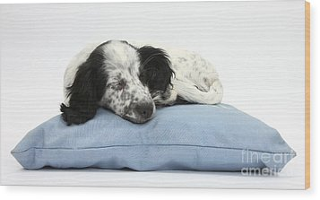 Border Collie X Cocker Sleeping Puppy Wood Print by Mark Taylor