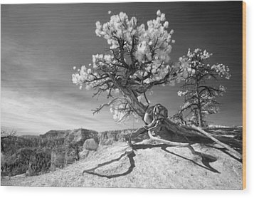 Wood Print featuring the photograph Bryce Canyon Tree Sculpture by Mike Irwin