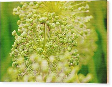 Budding Foliage Wood Print