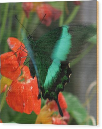 Butterfly Abstraction Wood Print by Valia Bradshaw
